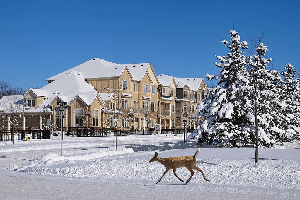 Stonebridge Winter Visitors