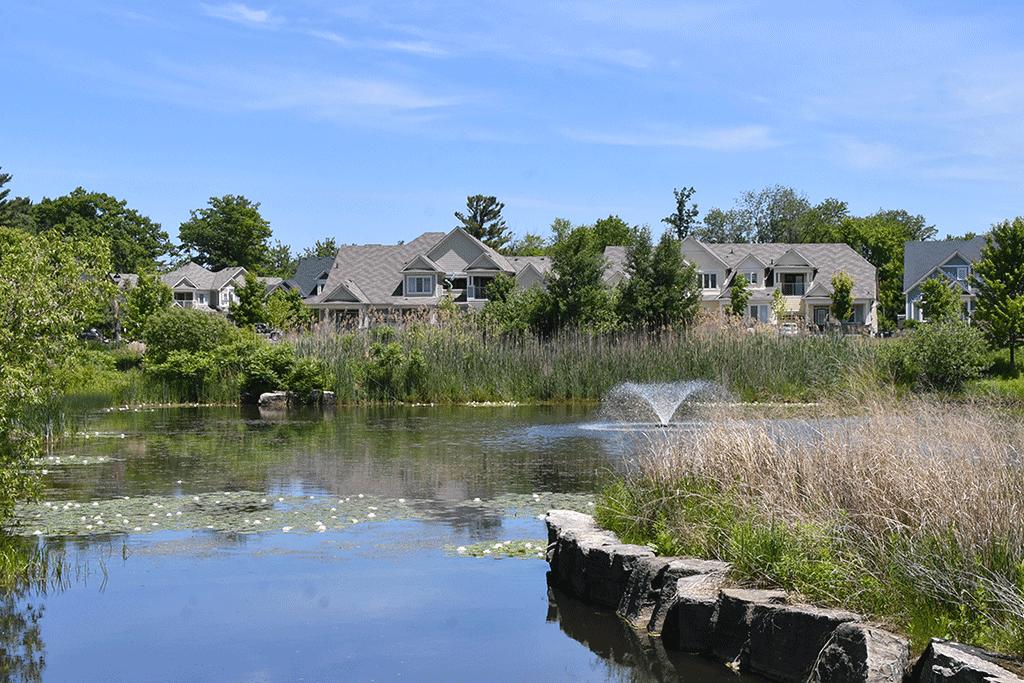Waterlilies on Walden Pond