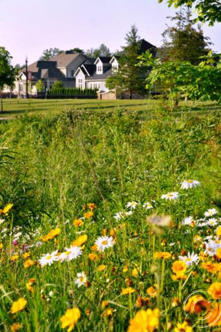 Stonebridge Wildflowers