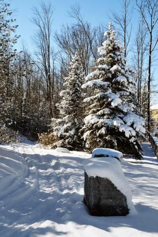 Stonebridge Trail on a Sunny Winter Day